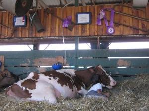 County Fair 2013 236