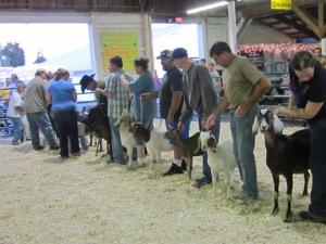 County Fair 2013 355