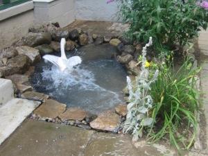 Garden August 2013 026