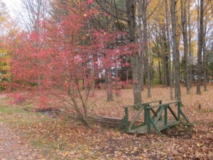 Footbridge in Fall