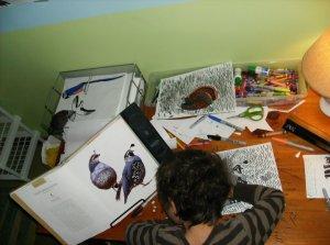 drawingquail