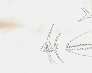 sparrow-fish-001-2