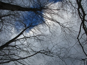 tree-sky-1